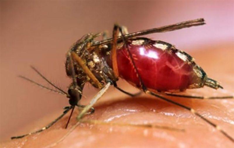 Dấu hiệu sốt xuất huyết - Cách đuổi và diệt muỗi hiệu quả