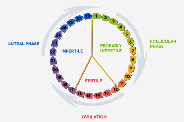 Giai đoạn hoàng thể là gì? Ảnh hưởng thế nào đến việc thụ thụ thai